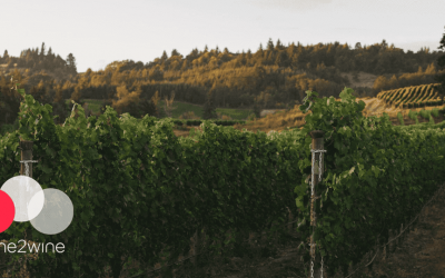 Precision agriculture & sons: what is precision viticulture